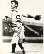 Mordecai Brown Chicago Cubs LIMITED STOCK 8X10 Photo