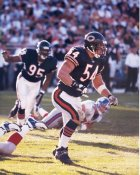 Brian Urlacher Chicago Bears LIMITED STOCK 8X10 Photo