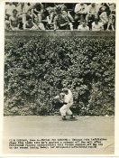Jimmy King Chicago Cubs  June 6, Grabs a Rebound off the Ivy Wall / Press Photo Slight Creases 7X9 Photo
