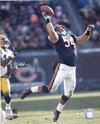 Brian Urlacher Chicago Bears Slight Corner Crease SUPER SALE 8X10 Photo