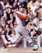 Stan Musial St. Louis Cardinals 8X10 Photos LIMITED STOCK