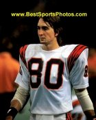 Chris Collinsworth Cincinnati Bengals 8X10