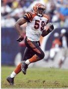Landon Johnson Cincinnati Bengals 8X10 Photo