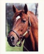HR Secretariat Horse Racing 8x10 Photo