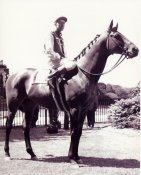 HR Seabiscuit Horse Racing 8x10 Photo