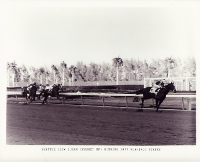 HR Seattle Slew 1977 Flaminco Stakes Horse Racing 8x10 Photo