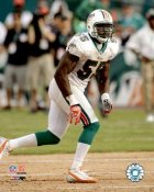 Joey Porter Miami Dolphins 8X10 Photo