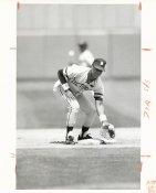 Lou Whitaker Wire Photo 8x10 Tigers