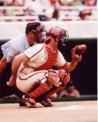 Tim McCarver St. Louis Cardinals 8X10 Photo