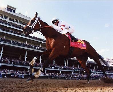 HR Big Brown Horse Racing 8x10 Photo