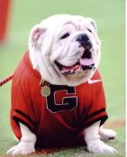 Mascot Georgia Bull Dogs 8x10 Photo