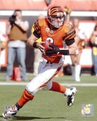 Carson Palmer LIMITED STOCK Cincinnati Bengals 8X10 Photo