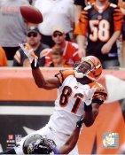 Terrell Owens Cincinnati Bengals 8X10 Photo