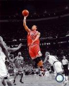 Derrick Rose Spotlight Chicago Bulls 8X10 Photo LIMITED STOCK
