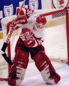Chris Osgood LIMITED STOCK Red Wings 8x10 Photo